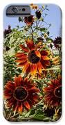 Sunflower Layers IPhone Case by Kerri Mortenson