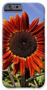 Sunflower Sky IPhone Case by Kerri Mortenson