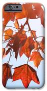 Sunlight On Red Leaves IPhone Case by Natalie Kinnear