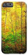 Sunlights Warmth IPhone Case by Frozen in Time Fine Art Photography