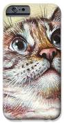 Surprised Kitty IPhone Case by Olga Shvartsur
