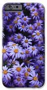Sweet Dreams Of Purple Daisies IPhone Case by Carol Groenen