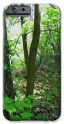 Swirled Forest 1 - Digital Painting Effect IPhone Case by Rhonda Barrett