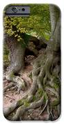 Taking Root IPhone Case by Heiko Koehrer-Wagner