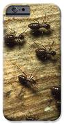 Termites On Wood With One Carrying IPhone Case by Konrad Wothe