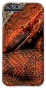 The Florida Cottonmouth IPhone Case by JC Findley