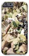 The Grapevines IPhone Case by Lisa Russo