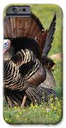 The Line Up IPhone Case by Todd Hostetter