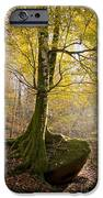 The Rock Tree IPhone Case by Sophie De Roumanie