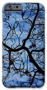 The Veins Of Time IPhone Case by Andrew Pacheco