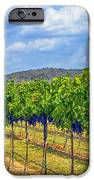 The Vineyard In Color IPhone Case by Kristina Deane