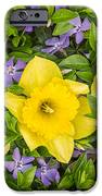 Three Daffodils In Blooming Periwinkle IPhone Case by Adam Romanowicz