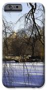 Through The Branches 1 - Central Park - Nyc IPhone Case by Madeline Ellis