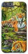 Tiger Family At The Pool IPhone Case by Jan Patrik Krasny