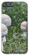Toadstools V9 IPhone Case by Douglas Barnard