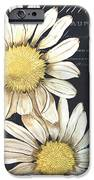 Tranquil Daisy 1 IPhone Case by Debbie DeWitt