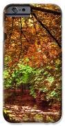 Tree In The Park. De Haar Castle. Utrecht  IPhone Case by Jenny Rainbow