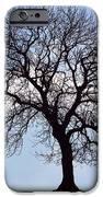 Tree Silhouette IPhone Case by Natalie Kinnear