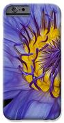 Tropical Day Flowering Waterlily IPhone Case by Susan Candelario