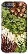 Turnip And Chard Concerto IPhone Case by Jen Norton