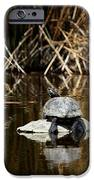 Turtle On Turtle IPhone Case by Ernie Echols