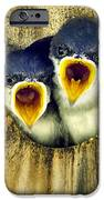 Two Tree Swallow Chicks IPhone Case by Christina Rollo