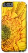 Unrivaled IPhone Case by Heidi Smith