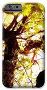 Untitled-twin Trees IPhone Case by Juliann Sweet