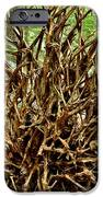 Uprooted IPhone Case by Adam Jewell