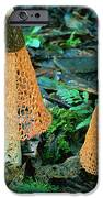 Veiled Lady Mushrooms IPhone Case by Glen Threlfo