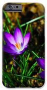 Vibrant Crocuses IPhone Case by Karol Livote