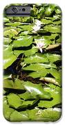 Water Lillies IPhone Case by Les Cunliffe