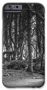 We Follow The Path IPhone Case by Jon Glaser