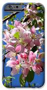 Weeping Cherry Tree Blossoms IPhone Case by Carol Groenen