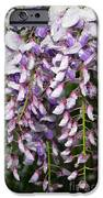Weeping Wisteria - Spring Snow - Ice - Lavender - Flora IPhone Case by Andee Design