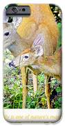 Whitetailed Deer Doe And Fawn IPhone Case by A Gurmankin