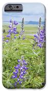 Wild Lupine IPhone Case by Theresa Tahara