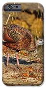 Wild Turkey IPhone Case by Al Powell Photography USA