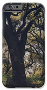 Wildly And Desperately My Arms Reached Out To You IPhone Case by Laurie Search