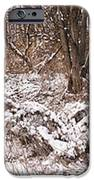Winter Forest Panorama IPhone Case by Elena Elisseeva