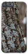Winter Lichen IPhone Case by Elizabeth Sullivan