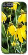 Yellow Cone Flowers Rudbeckia IPhone Case by Rich Franco