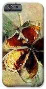 Yucca Pod - Barbara Chichester IPhone Case by Barbara Chichester