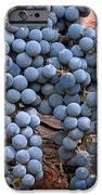Zinfandel Wine Grapes IPhone Case by Charlette Miller
