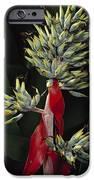 Atlantic Forest Bromeliad Brazil IPhone Case by Mark Moffett