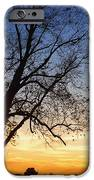 Bare Tree At Sunset IPhone Case by Skip Nall
