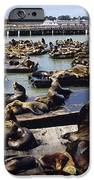 California Sea Lions IPhone Case by Alan Sirulnikoff
