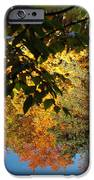 Colorful Reflections IPhone Case by LeeAnn McLaneGoetz McLaneGoetzStudioLLCcom