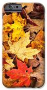 Fall Leaves Background IPhone Case by Elena Elisseeva