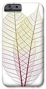 Skeleton Leaves IPhone Case by Elena Elisseeva